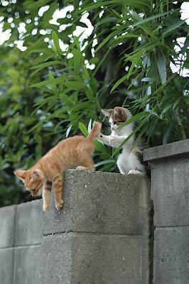 茶トラ・キジトラ子猫兄弟