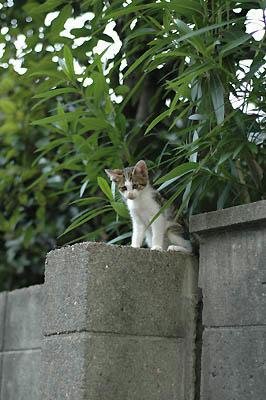 キジトラ子猫