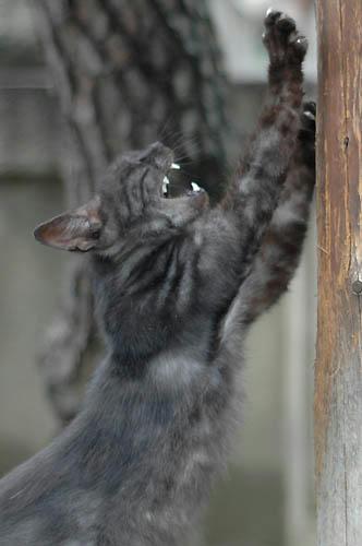 黒スモーク猫