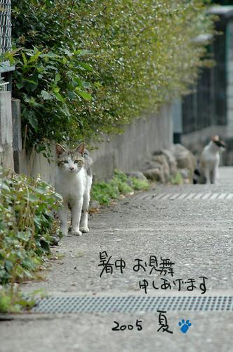 キジ白と三毛猫