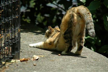 三毛猫 伸び