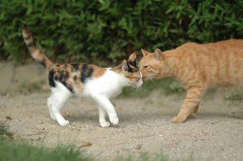 三毛子猫と茶トラ