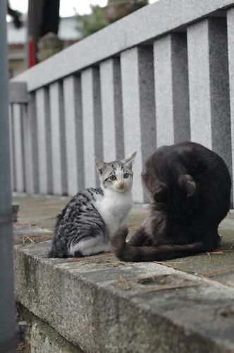 サバ白子猫とお母さん