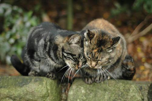 キジトラ&サビ猫