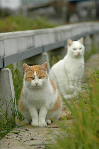 茶白猫と白猫