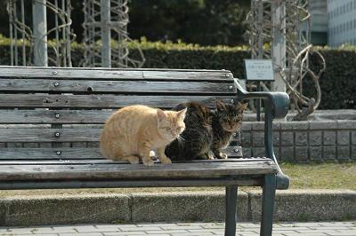 ベンチから・・・茶とトラとキジトラ