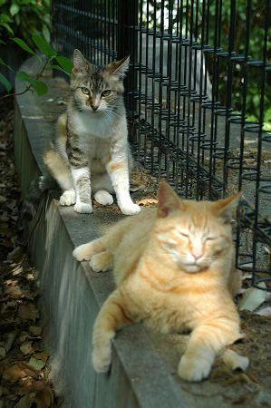 三毛猫母、茶トラ子
