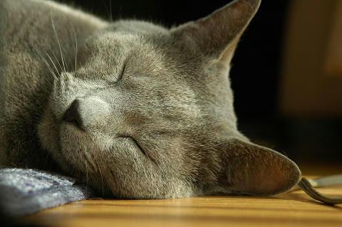 レオンの寝顔
