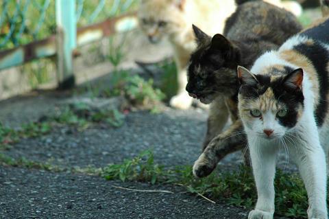 三毛猫サビ猫茶白猫