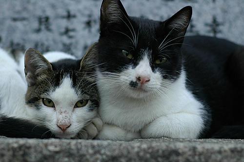 八われ・キジ白猫・マーちゃんとキーちゃん