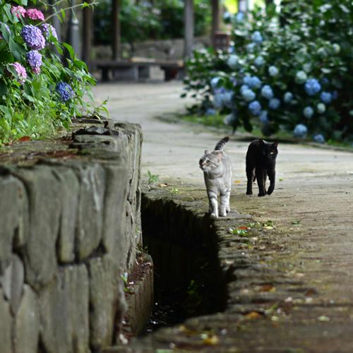サバトラ(みこちゃん)・黒猫(くりちゃん)