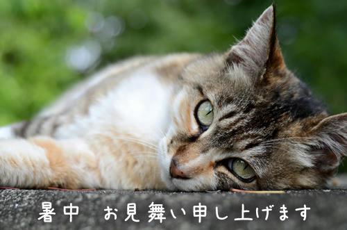 三毛猫ともちゃん