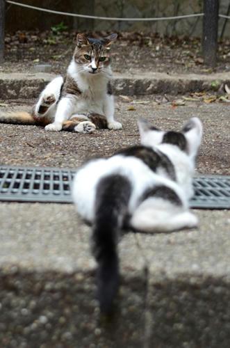 キジ白・ミーちゃん・子猫
