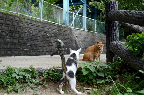 茶トラチビちゃんとキジ白子猫
