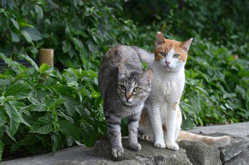 茶白ペロちゃんとサバ猫ミコちゃん