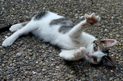 キジ白子猫