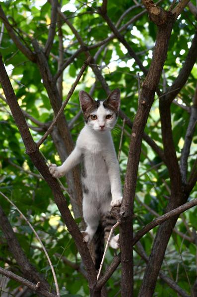 キジ白猫子猫