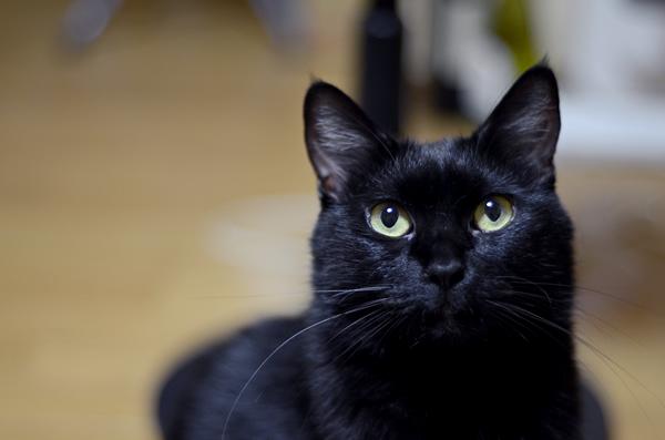 黒猫マチルダ
