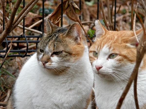 茶白猫・ペロちゃん サイちゃんと一緒