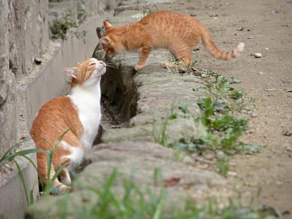 茶白猫・ペロちゃん 花ちゃんと一緒