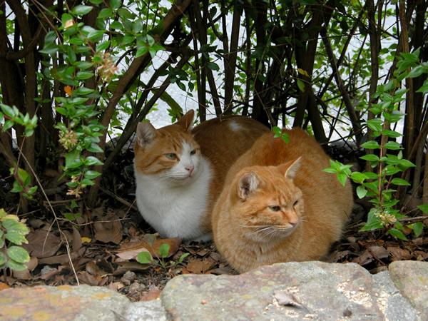 茶白猫・ペロちゃん チビッ子と一緒