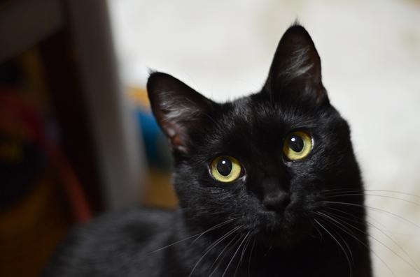 黒猫 マチルダ