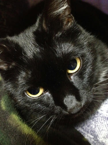 黒猫 まっちゃん マチルダ
