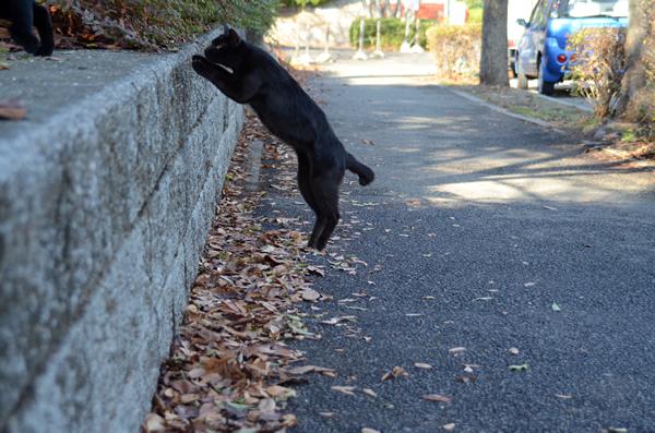 黒猫 ジャンプ
