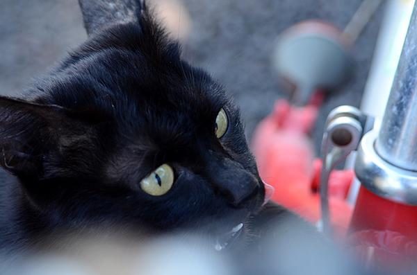 黒猫 赤い自転車