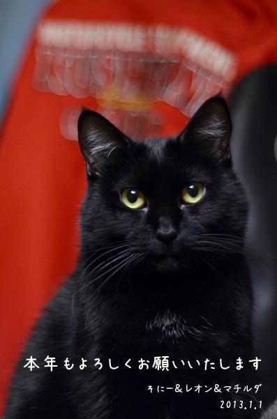 マチルダ 黒猫