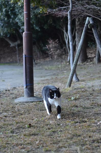 白黒はちわれ猫