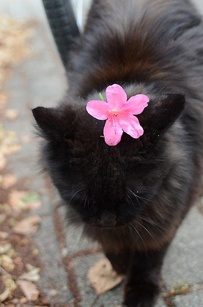 黒猫 ツツジ