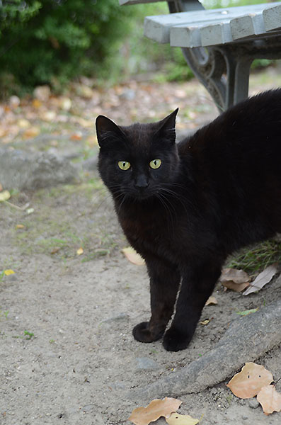 黒猫 ベンチ