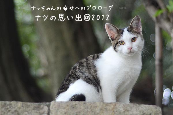 キジ白猫 子猫 ナッちゃん