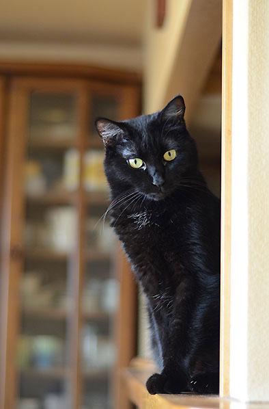マチルダ 黒猫 まっちゃん