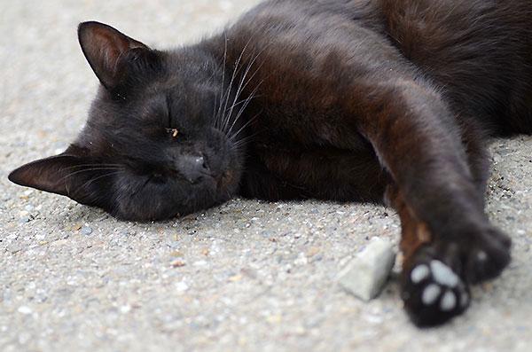 黒猫 お昼寝