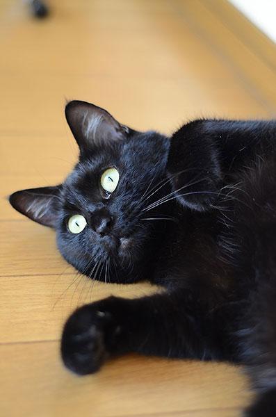 マチルダ まっちゃん 黒猫