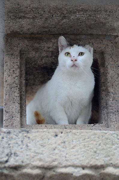 三毛猫 ミケちゃん