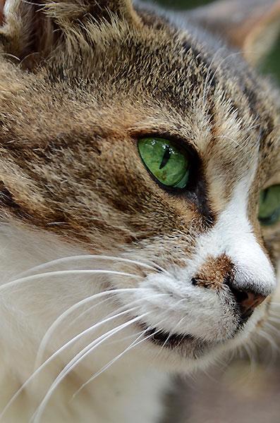 縞三毛猫 ミーちゃん