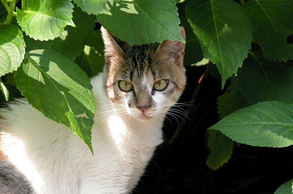 縞三毛猫 サイちゃん