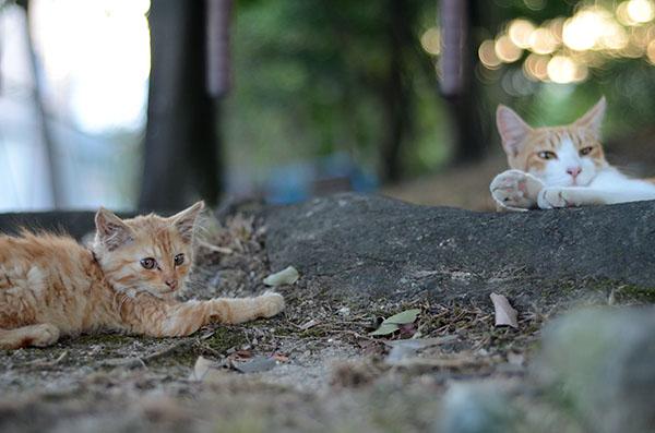 茶トラ猫 子猫 茶白猫