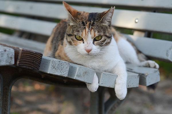 縞三毛猫 ベンチ