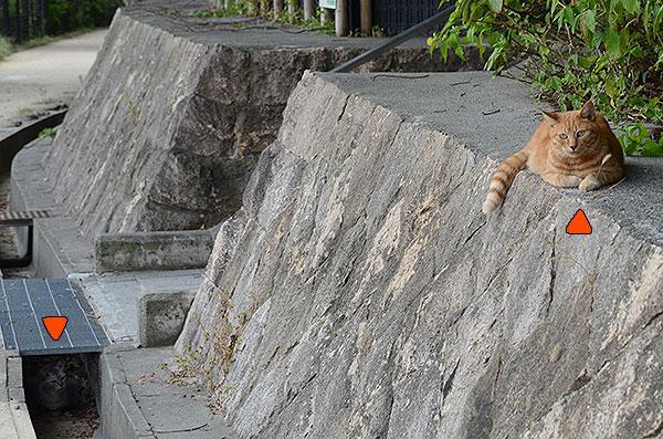 サバトラ猫 茶トラ猫