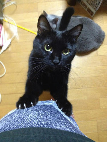 まっちゃん 黒猫