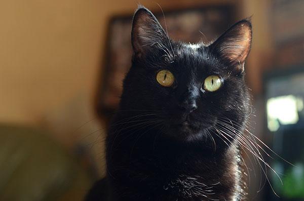 黒猫 まっちゃん