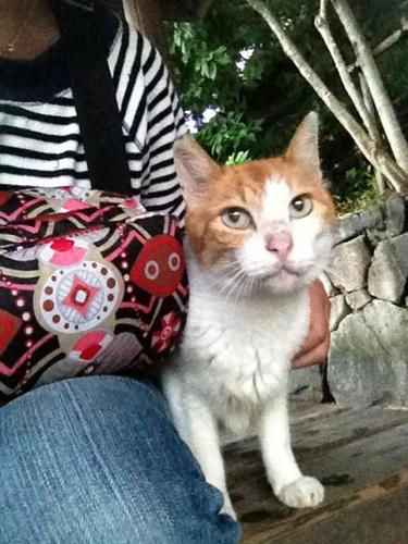 ペロちゃん 茶白猫