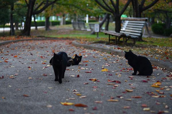 サビ猫 べっこう猫 黒猫 落ち葉