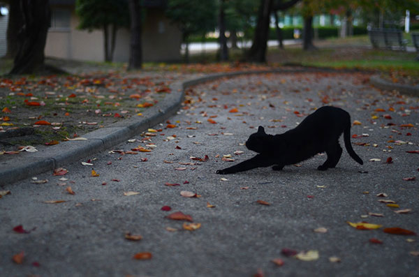 黒猫 落ち葉