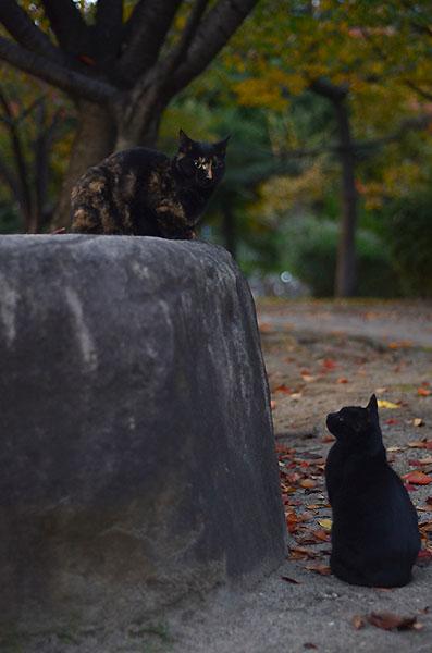 サビ猫 べっこう猫 黒猫
