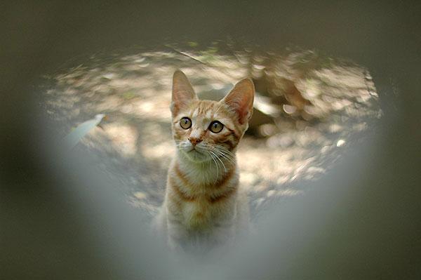 茶トラ猫 茶白猫 子猫